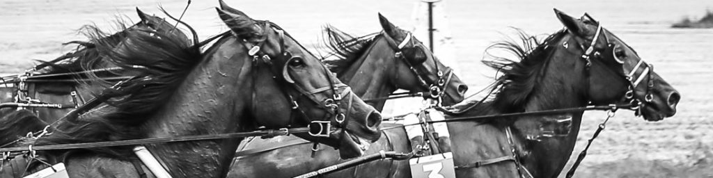 3 Year Old Trotting Championship Finals….